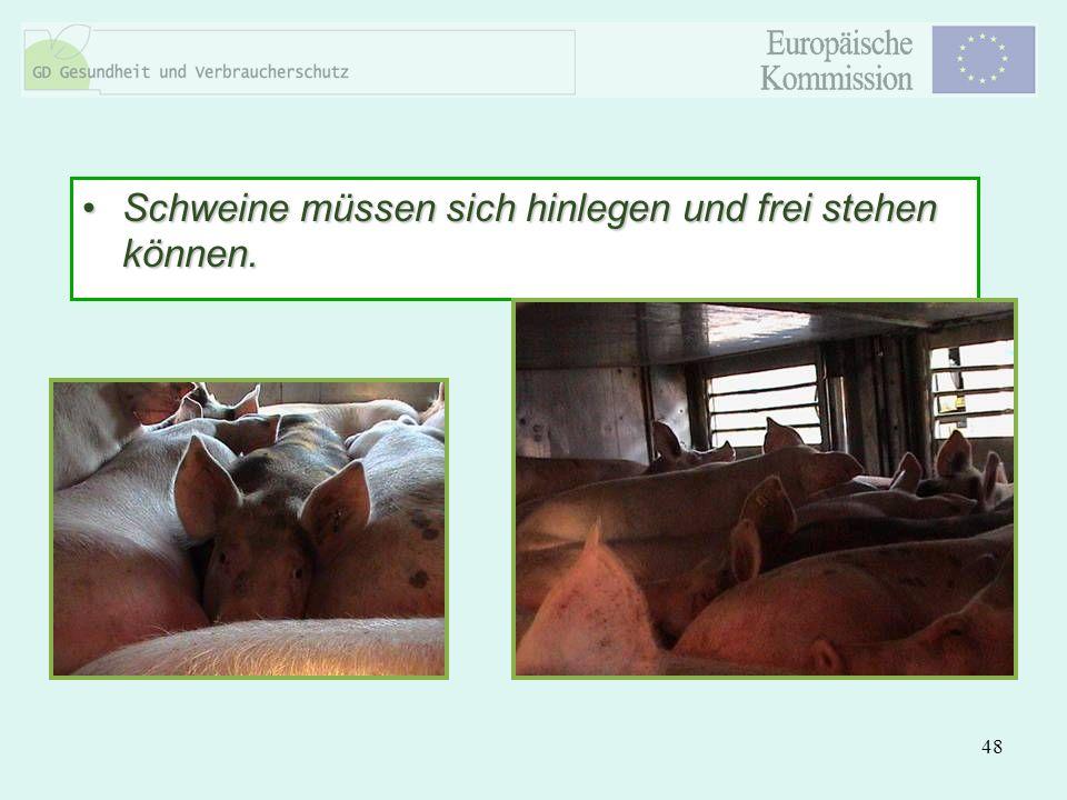 Schweine müssen sich hinlegen und frei stehen können.