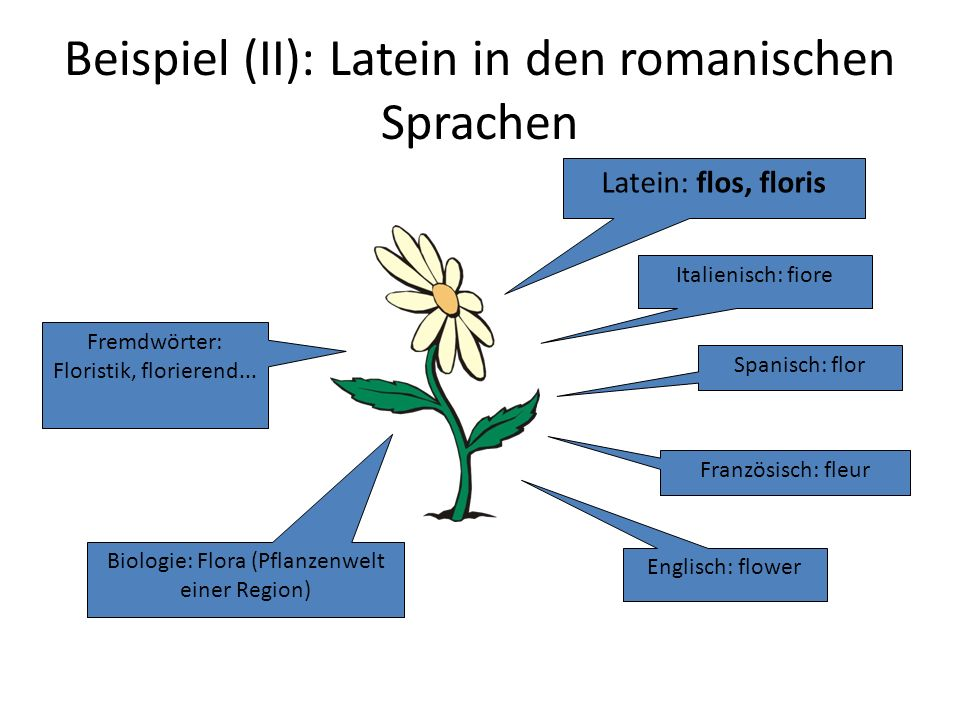 Beispiel (II): Latein in den romanischen Sprachen