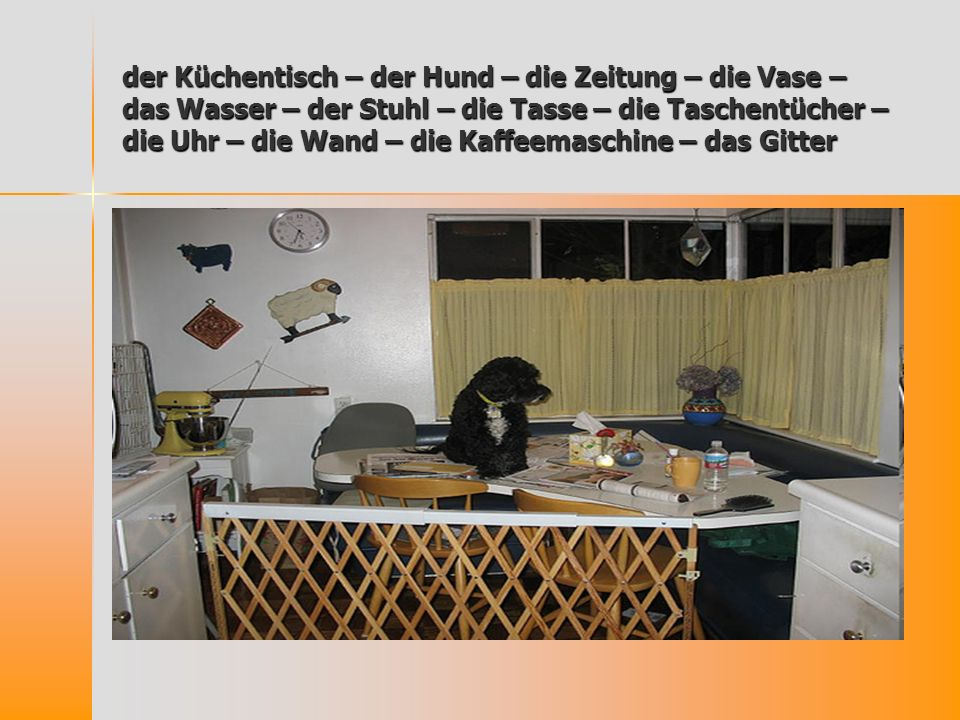 der Küchentisch – der Hund – die Zeitung – die Vase – das Wasser – der Stuhl – die Tasse – die Taschentücher – die Uhr – die Wand – die Kaffeemaschine – das Gitter