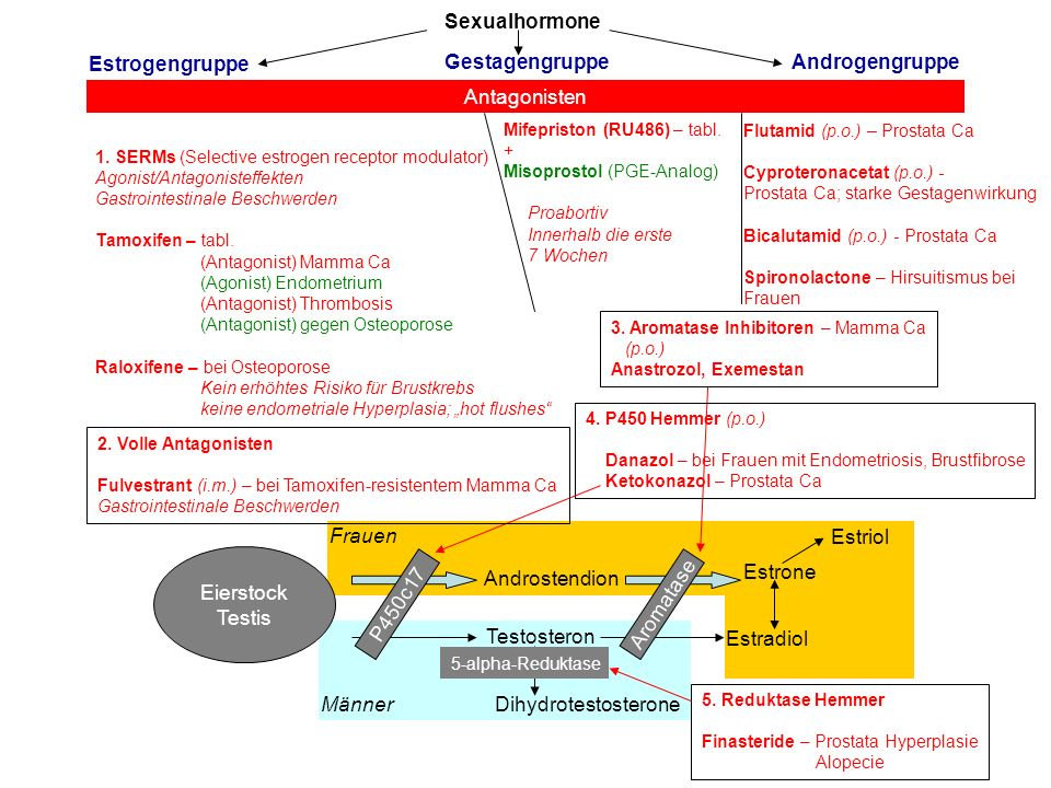 Sexualhormone Estrogengruppe Gestagengruppe Androgengruppe