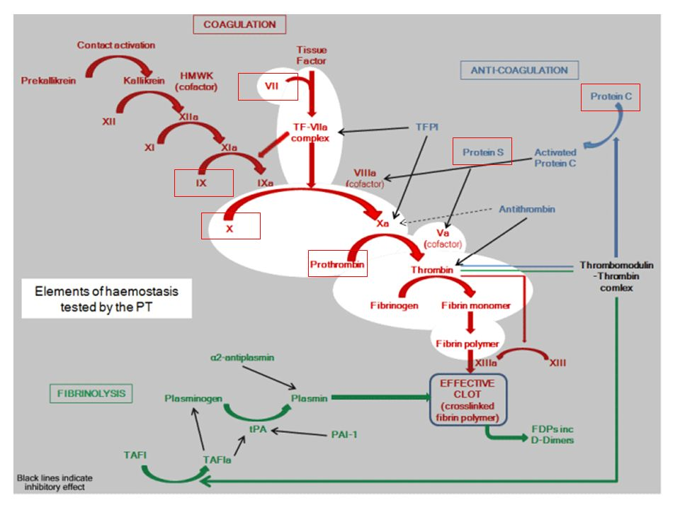 Beta1- und Beta2-Rezeptoren in den Koronarien – beta2 haben fast keine funktionelle Bedeutung