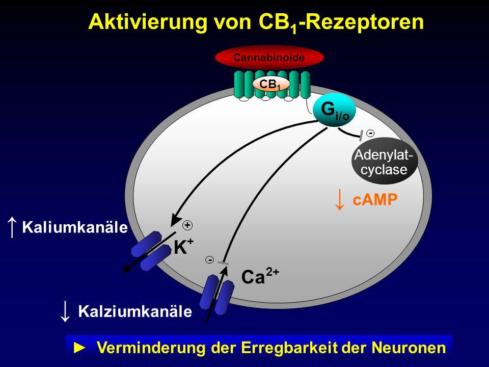 ► Verminderung der Erregbarkeit der Neuronen