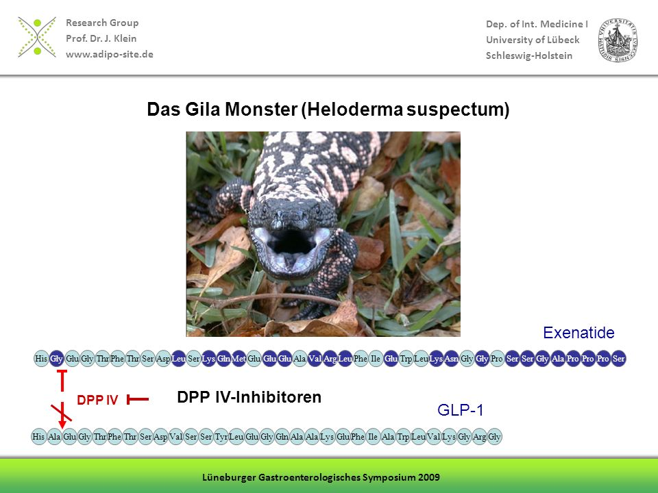 Das Gila Monster (Heloderma suspectum)