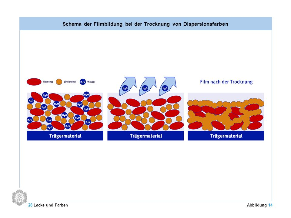 Schema der Filmbildung bei der Trocknung von Dispersionsfarben