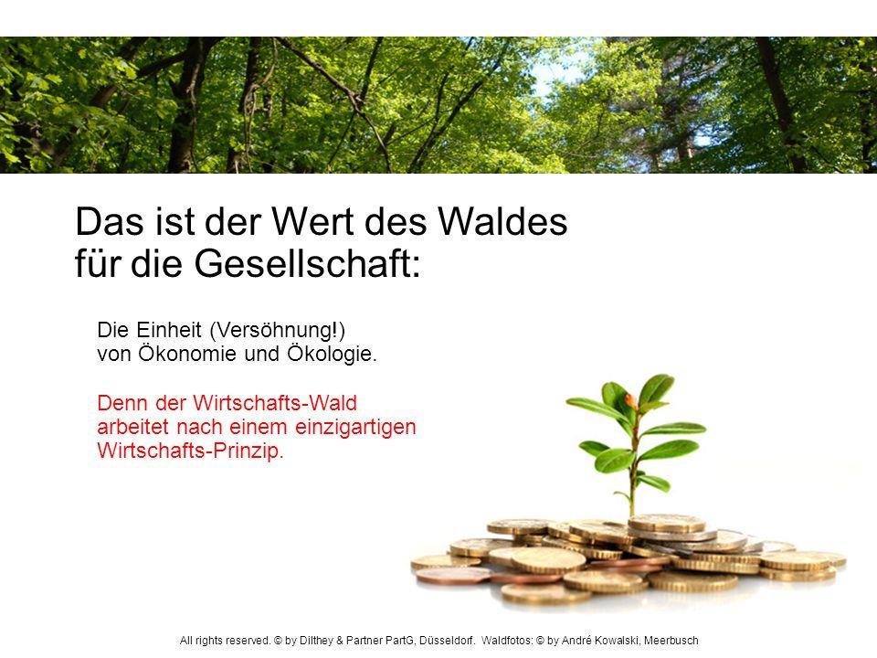 Das ist der Wert des Waldes für die Gesellschaft:
