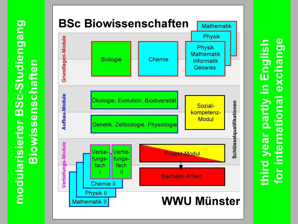 modularisierter BSc-Studiengang