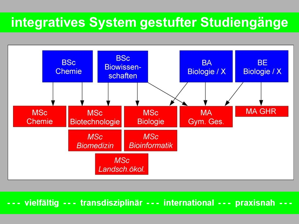 integratives System gestufter Studiengänge