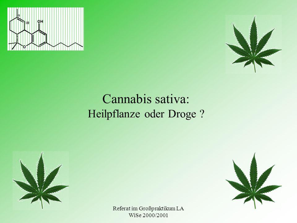 Cannabis sativa: Heilpflanze oder Droge