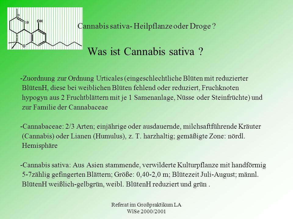 Cannabis sativa- Heilpflanze oder Droge
