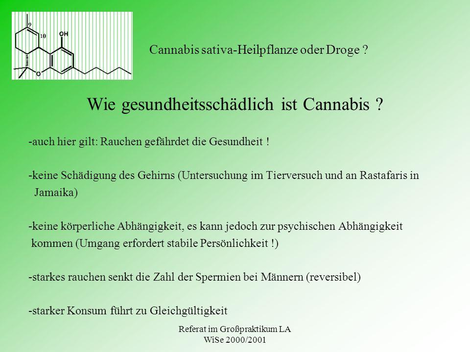 Cannabis sativa-Heilpflanze oder Droge
