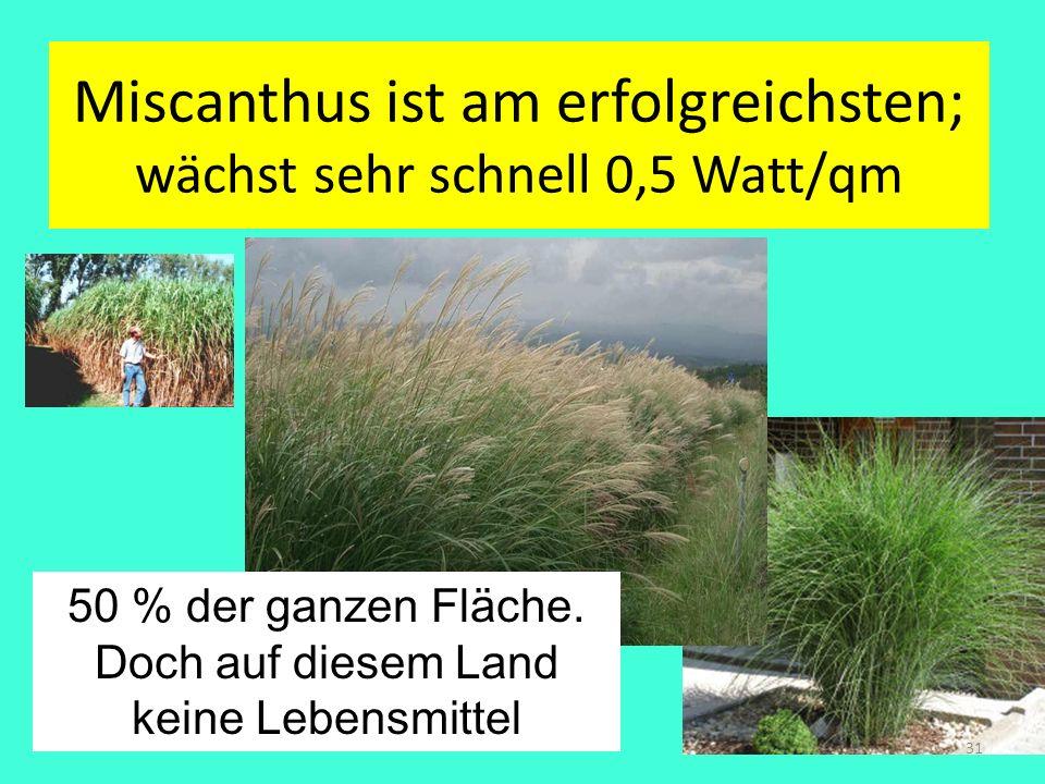 Miscanthus ist am erfolgreichsten; wächst sehr schnell 0,5 Watt/qm