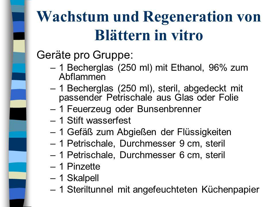 Wachstum und Regeneration von Blättern in vitro