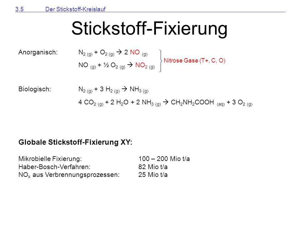 Stickstoff-Fixierung
