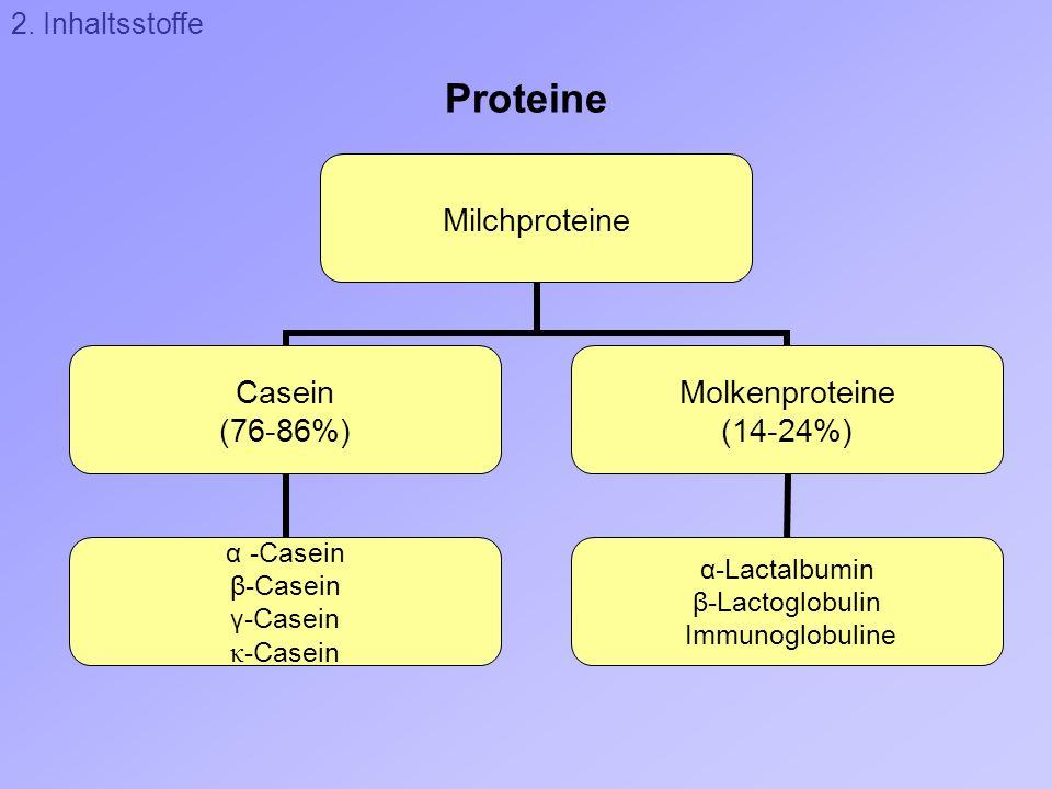 2. Inhaltsstoffe Proteine
