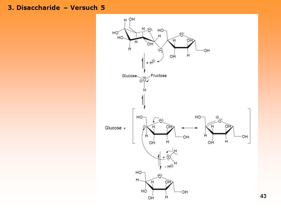 3. Disaccharide – Versuch 5