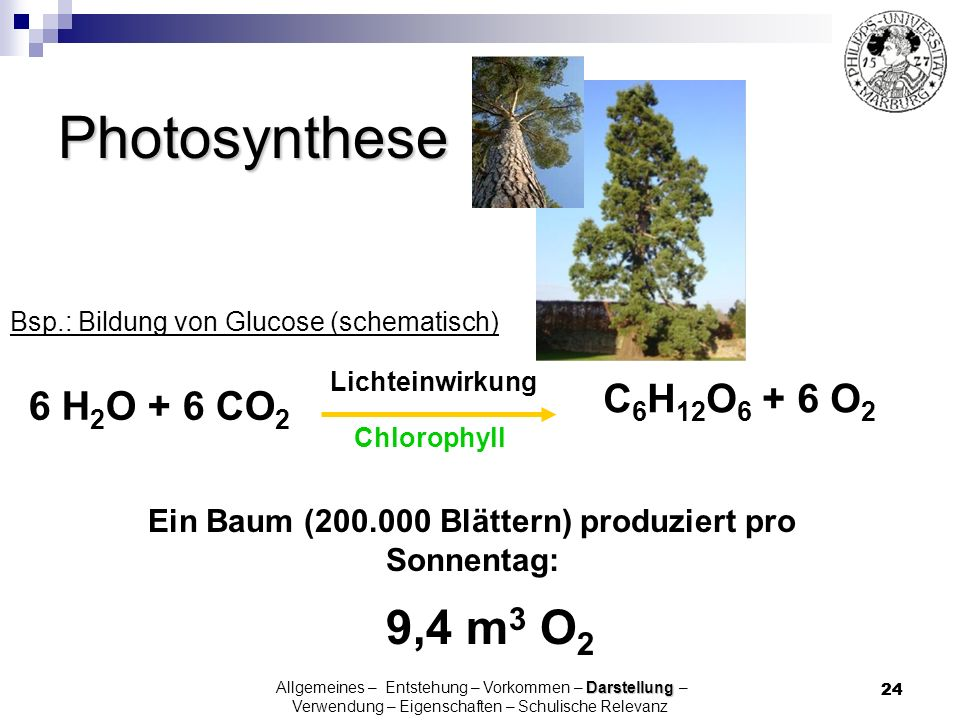 Ein Baum (200.000 Blättern) produziert pro Sonnentag: