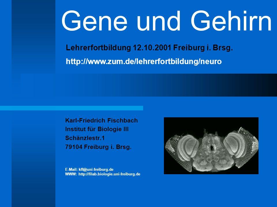 Gene und Gehirn Lehrerfortbildung 12.10.2001 Freiburg i. Brsg.