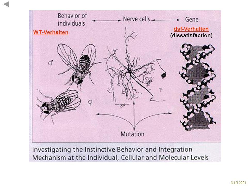 WT-Verhalten dsf-Verhalten (dissatisfaction)
