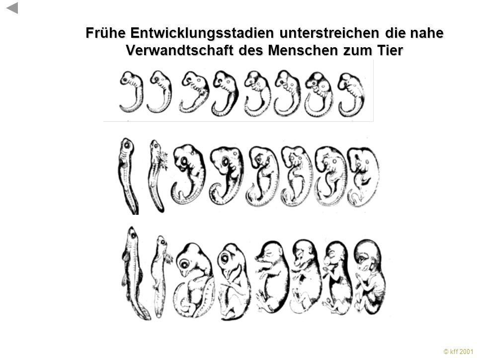 11.3.2001 Frühe Entwicklungsstadien unterstreichen die nahe Verwandtschaft des Menschen zum Tier. KF Fischbach, Freiburg.