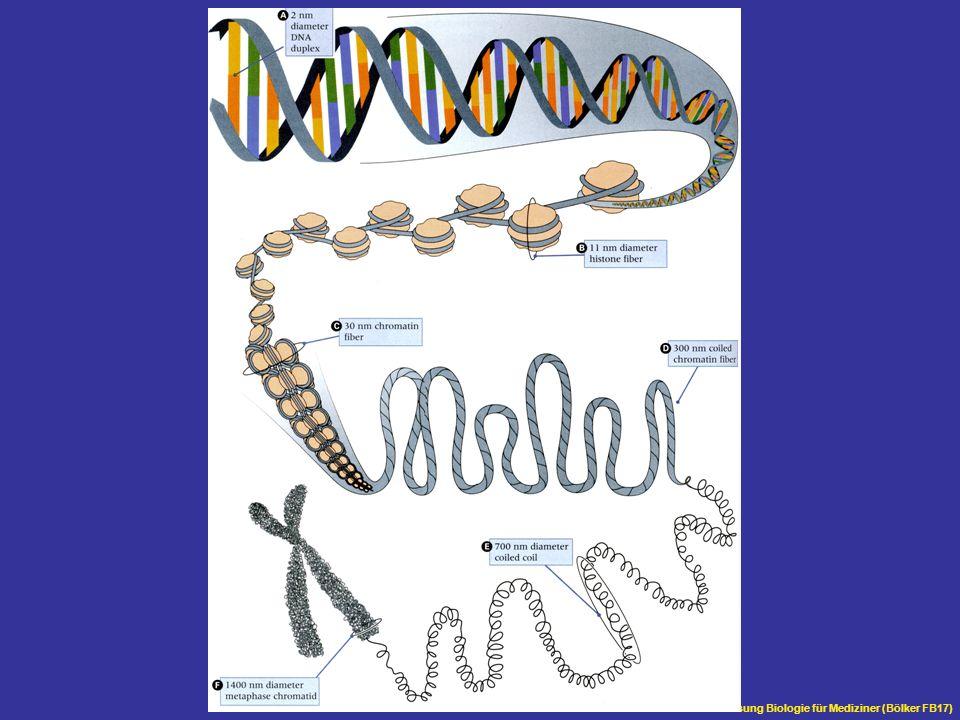 Übersicht Vorlesung Biologie für Mediziner (Bölker FB17)