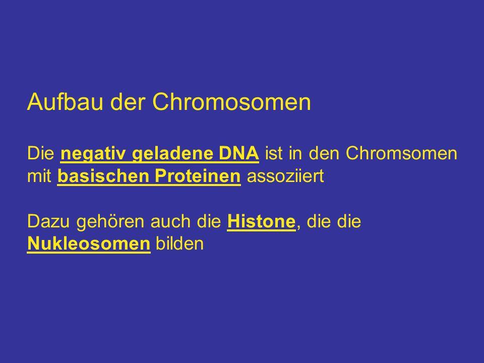 Aufbau der Chromosomen