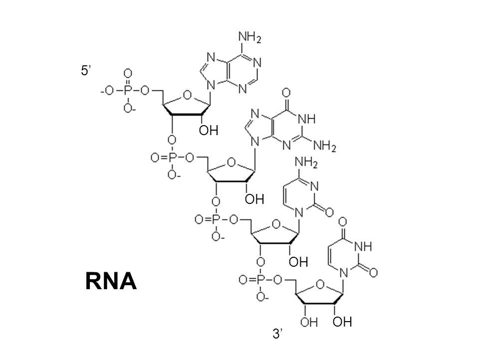 5' RNA OH 3'