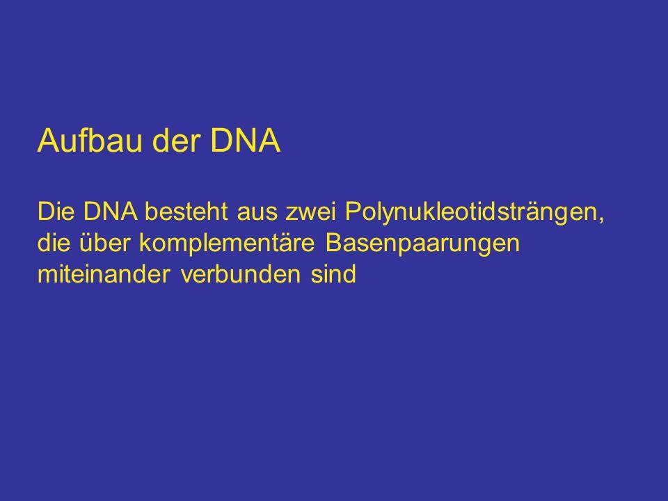 Aufbau der DNA Die DNA besteht aus zwei Polynukleotidsträngen,