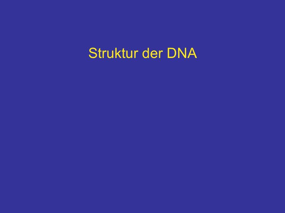 Struktur der DNA