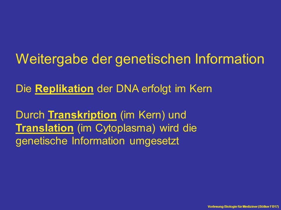 Weitergabe der genetischen Information