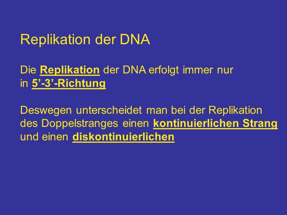 Replikation der DNA Die Replikation der DNA erfolgt immer nur