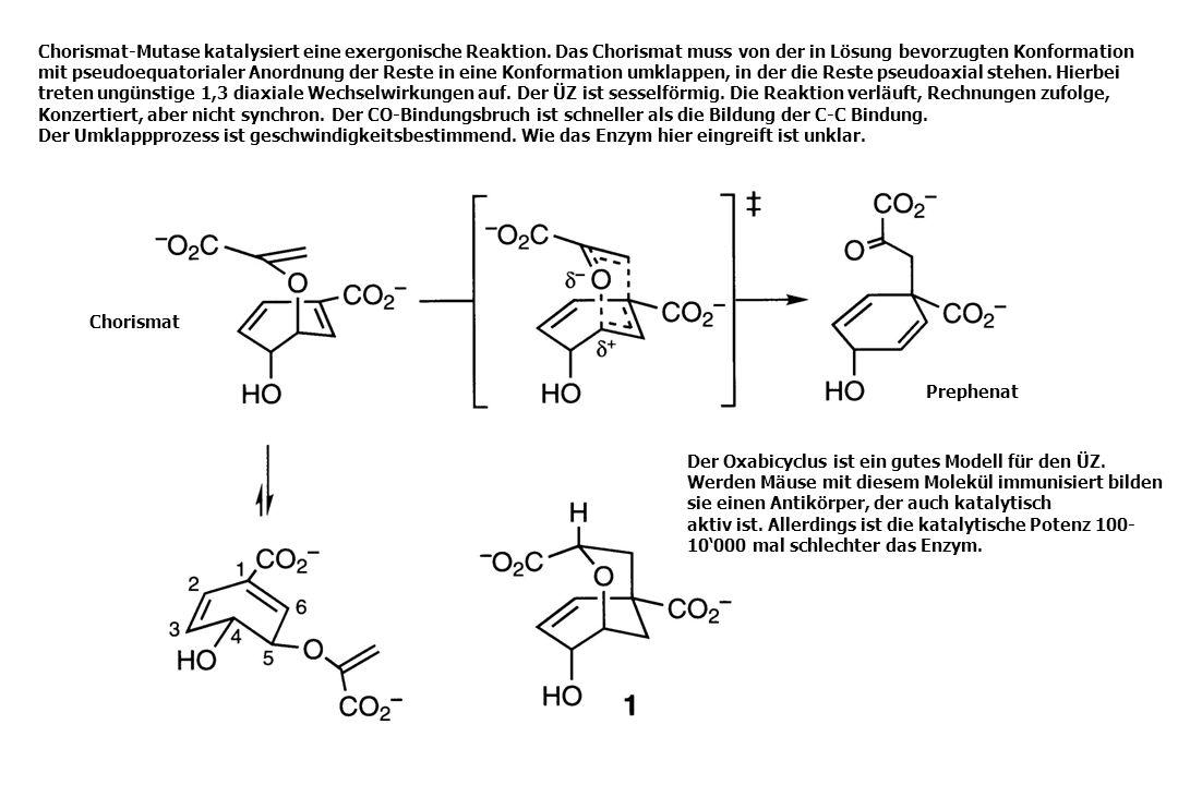 Chorismat-Mutase katalysiert eine exergonische Reaktion