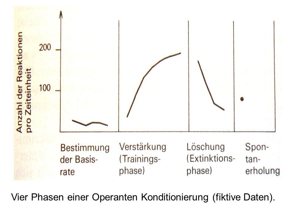Vier Phasen einer Operanten Konditionierung (fiktive Daten).