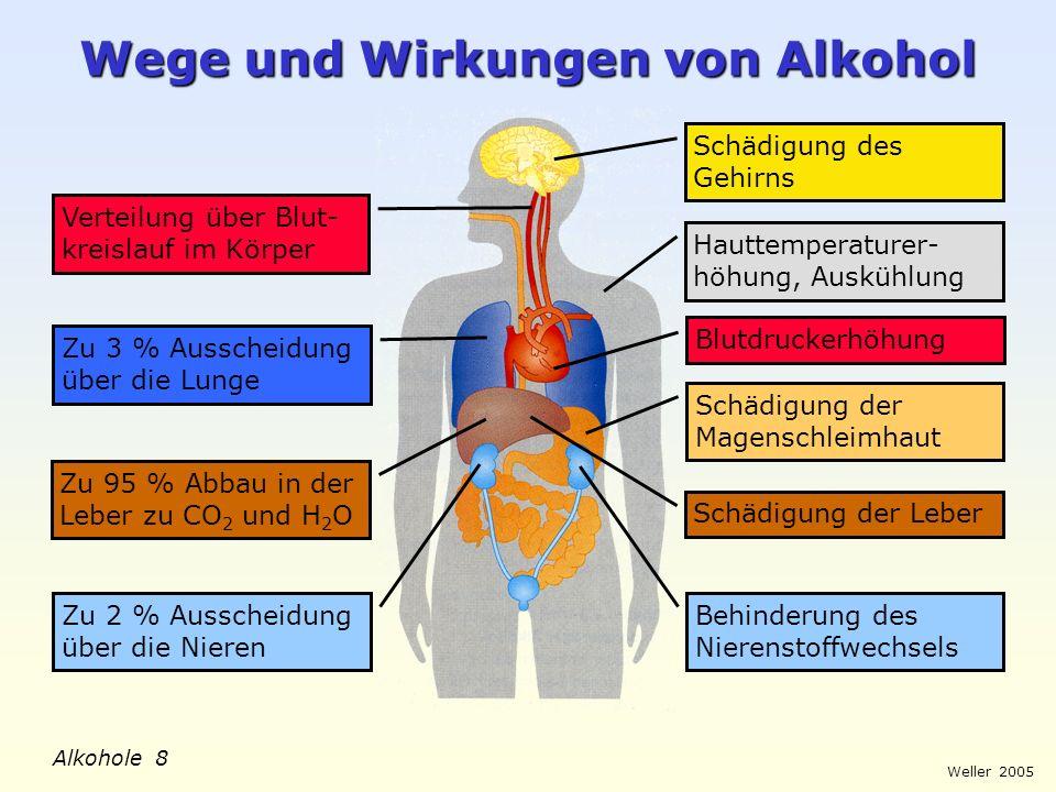 Wege und Wirkungen von Alkohol