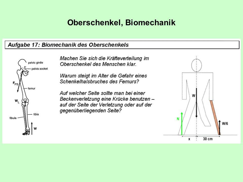 Oberschenkel, Biomechanik