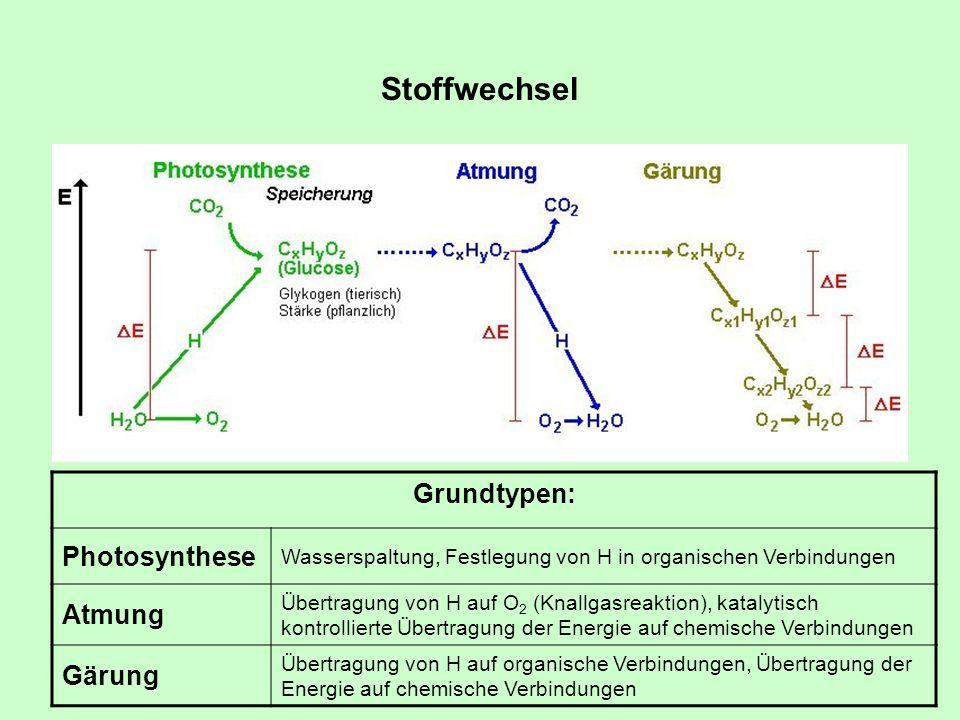 Stoffwechsel Grundtypen: Photosynthese Atmung Gärung