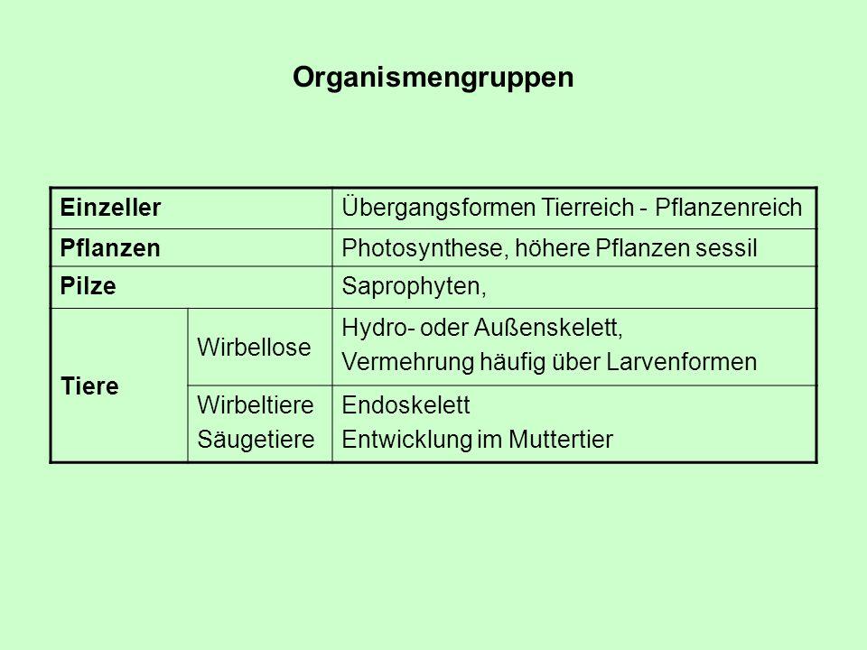 Organismengruppen Einzeller Übergangsformen Tierreich - Pflanzenreich