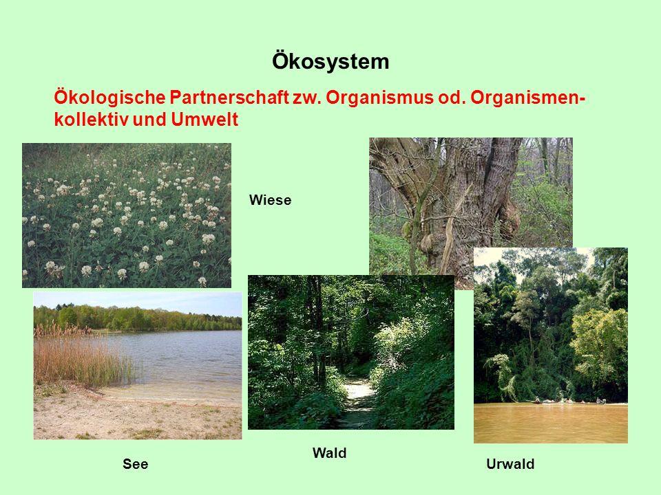 Ökosystem Ökologische Partnerschaft zw. Organismus od. Organismen-kollektiv und Umwelt. Wiese. Wald.