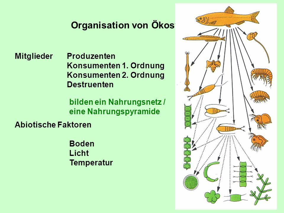 Organisation von Ökosystemen