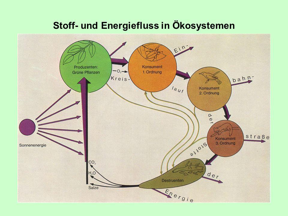 Stoff- und Energiefluss in Ökosystemen