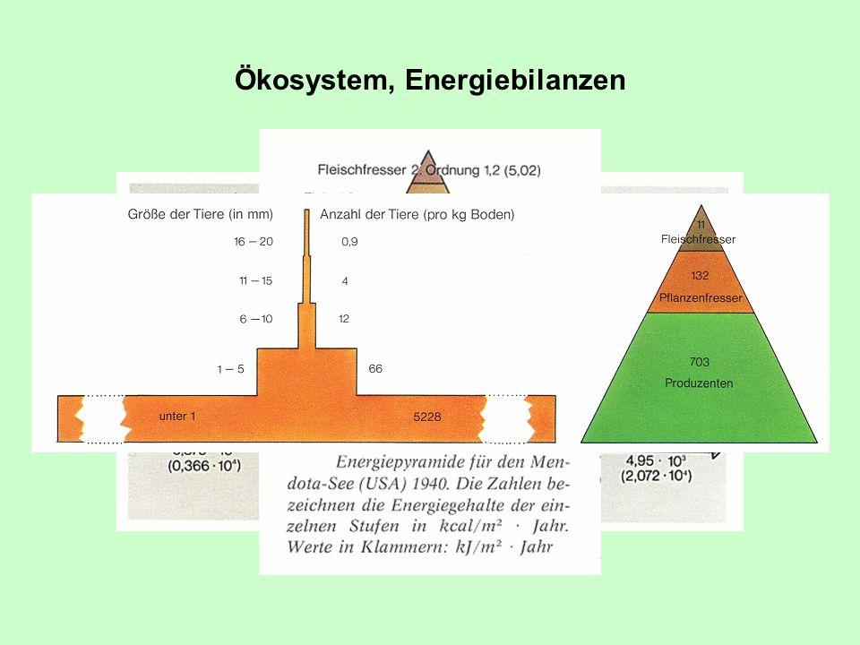 Ökosystem, Energiebilanzen