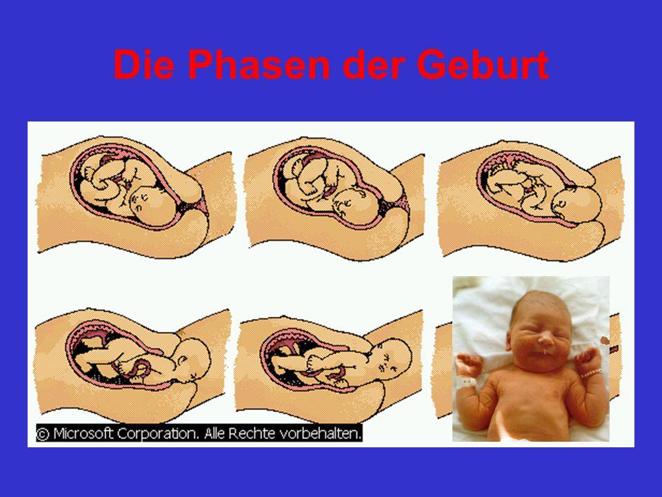 Die Phasen der Geburt