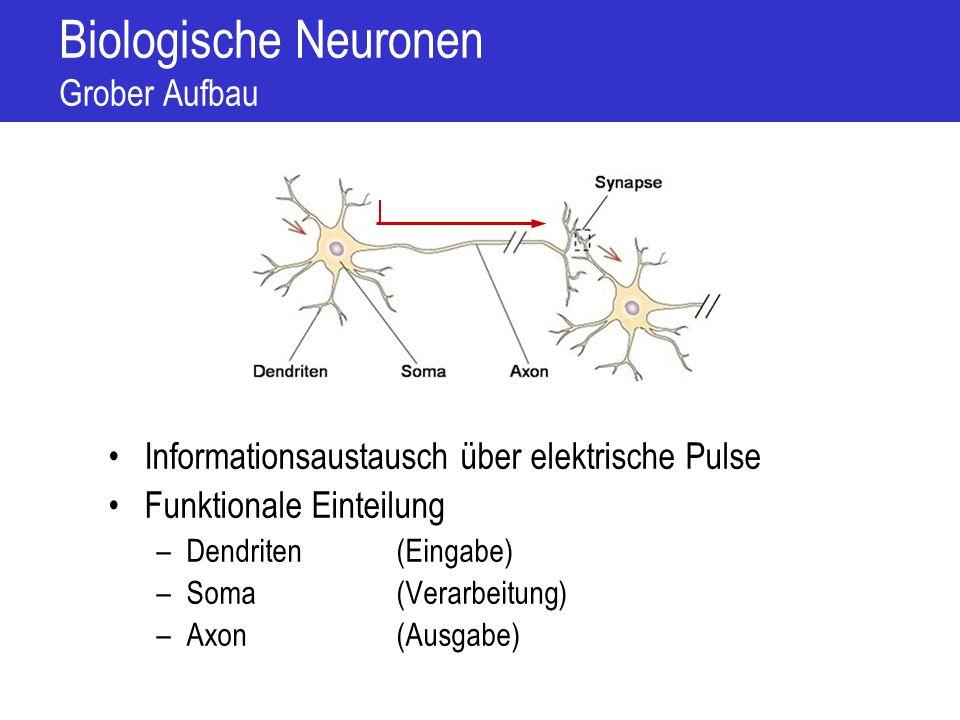 Biologische Neuronen Grober Aufbau