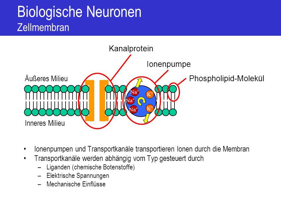 Biologische Neuronen Zellmembran