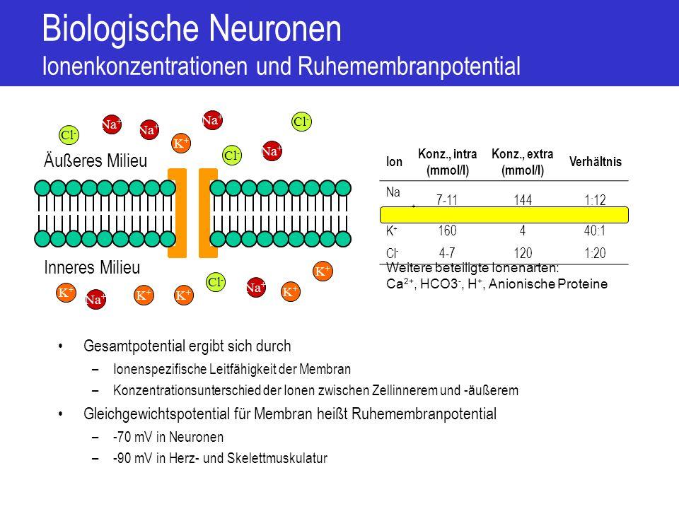 Biologische Neuronen Ionenkonzentrationen und Ruhemembranpotential