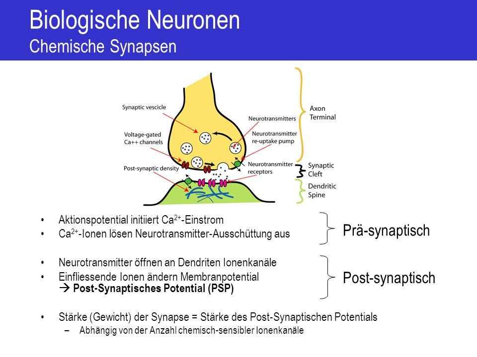 Biologische Neuronen Chemische Synapsen