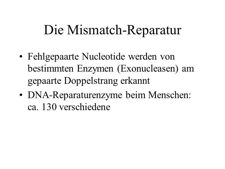 Die Mismatch-Reparatur