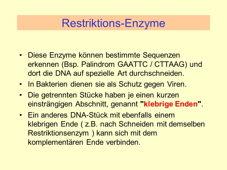 Restriktions-Enzyme