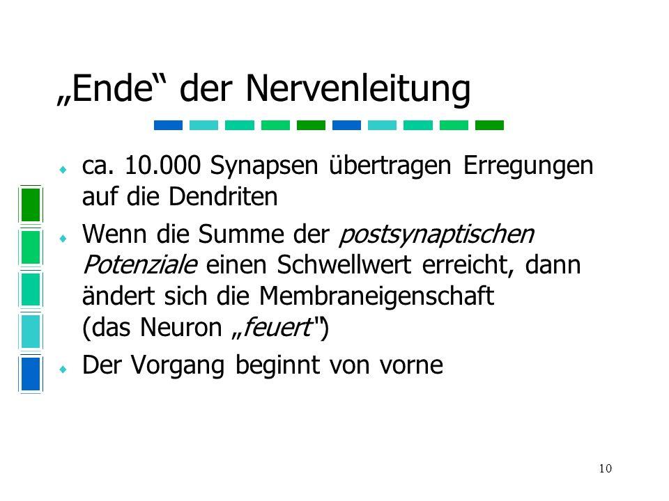 """""""Ende der Nervenleitung"""