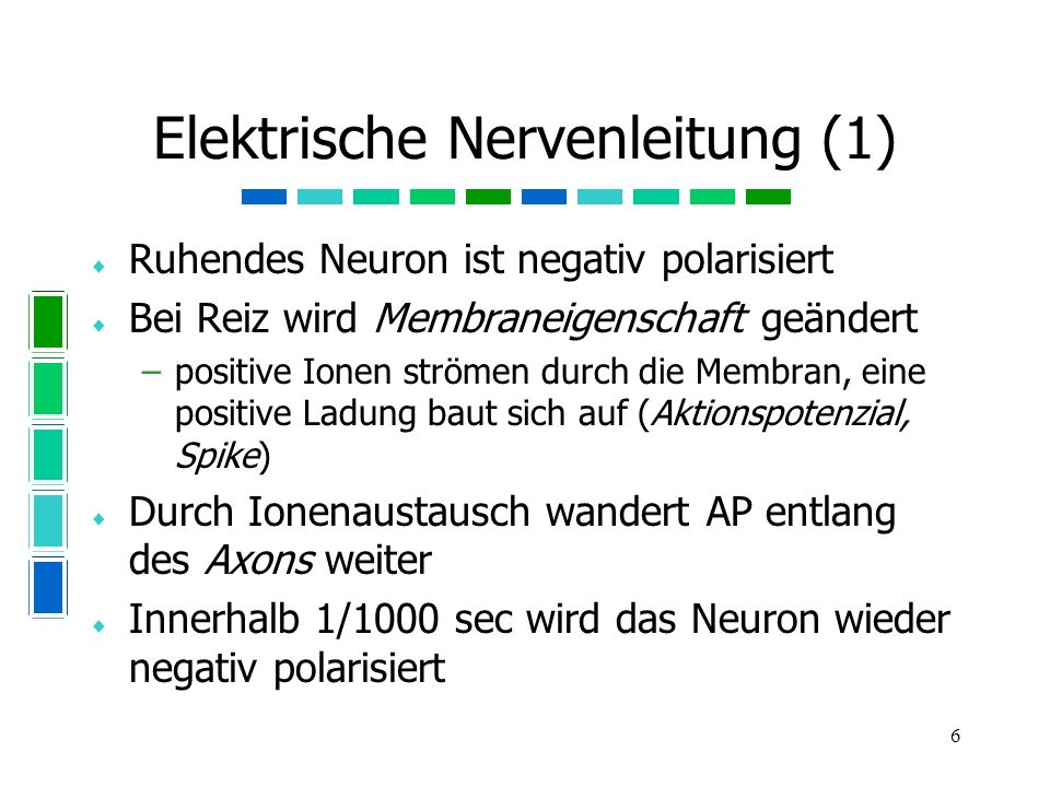 Elektrische Nervenleitung (1)