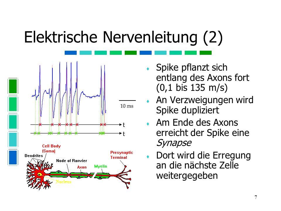 Elektrische Nervenleitung (2)